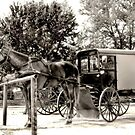 Horses 'n' Buggies by Dyle Warren