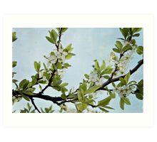 Apple in bloom Art Print