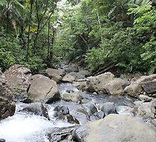 El Yunque National Forest by Sheryl Hopkins