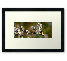 Intoxicating Nectar Framed Print