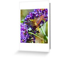 Bumble bee humming bird moth Greeting Card
