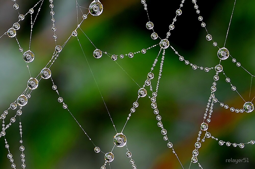 Close up of Dewdrops Using a Ring Light by relayer51