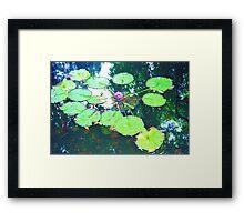 Flower Reflection Framed Print