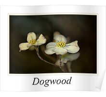 Dogwood Poster