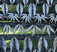 Dried Fish by mrivserg