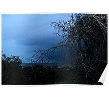 Driftwood Beach Jekyll Island Ga  Poster