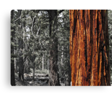 Sugar pine trunk in the woods- Tahoma Canvas Print