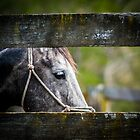 Equines in front of my Camera by CJO Photography by Candice84
