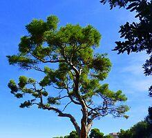 Cap Ferrat Pine by Fara