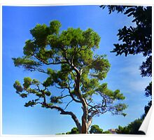 Cap Ferrat Pine Poster