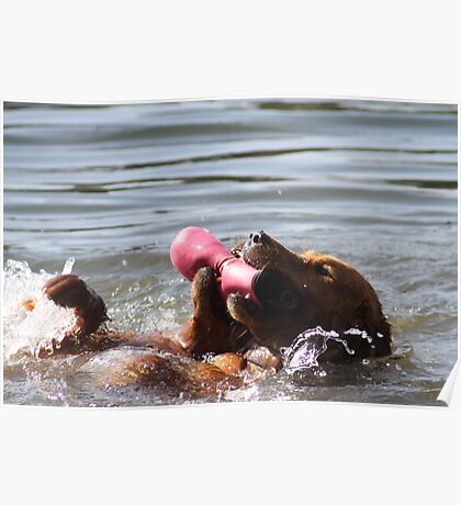 Dual Water Fetching Backstroke Style Poster