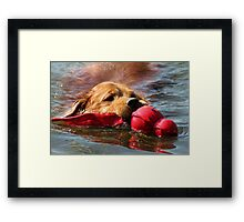 Loki Water Fetching Reflections Framed Print