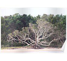 Shackleford Island Tree Bones Poster