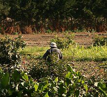 Ecuadorian Farmer in a Field by rhamm