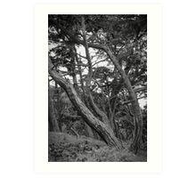 Baker Beach Trees 2 Art Print