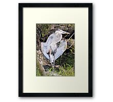 Flasher In The Park Framed Print