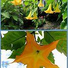Moon Flowers in Gold #2 by Paula Tohline  Calhoun