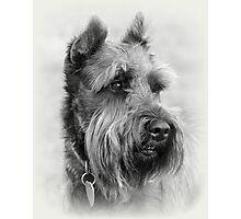 Bearded Dog Photographic Print