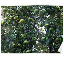 Apple pie? Apple tart? Apple crumble? Poster