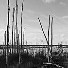 Last of the Melaleucas by njordphoto