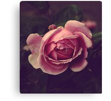 One rose _ Square Canvas Print