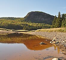 View from Sand Beach Acadia by Michele Conner
