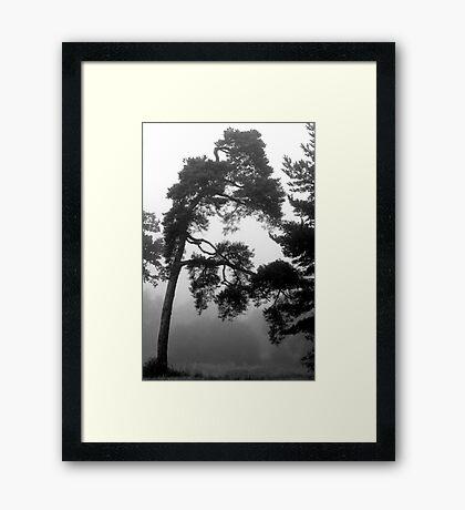Mystree Framed Print