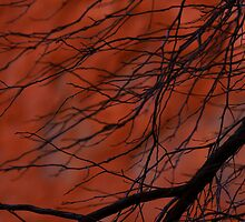 Red Centre twigs by Wanda Craswell