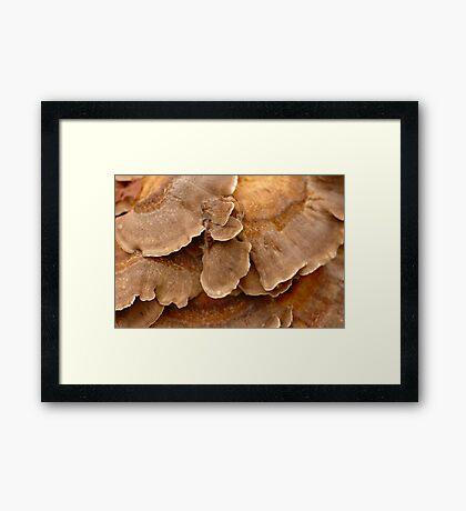 Fungi Patterns Framed Print