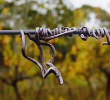 Dried vine tendril Sinclair's Gully vineyard by Harvey Schiller