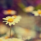 buttercup daisies by Ingz