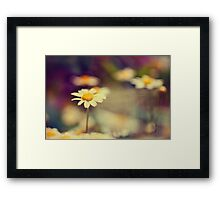 buttercup daisies Framed Print