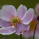 Pretty Pink Flower by Samantha Higgs