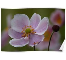 Pretty Pink Flower Poster