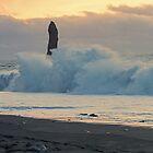A big wave at dawn by Judi Lion