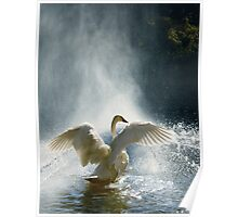Water Mist Bathing Poster