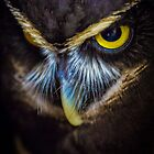 Spectacled Owl trying to flirt with me by alan shapiro