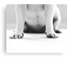 Pug Feet Canvas Print