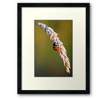 Ladybird on Grass Framed Print