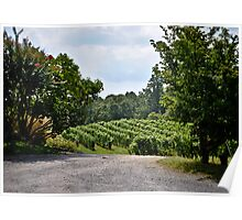 Linden Vineyards 3 Poster