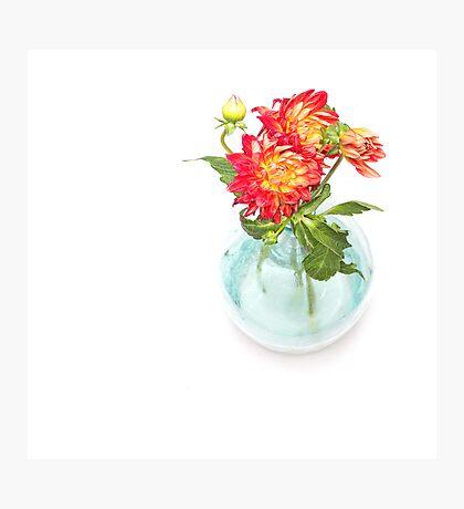 Dahlias in a vase... (9) Photographic Print
