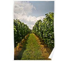 Linden Vineyards 5 Poster