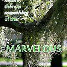 Something Marvelous by Paula Tohline  Calhoun