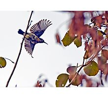 I am free! Photographic Print