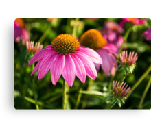 Coneflowers 2 Canvas Print