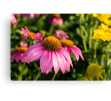 Coneflowers 5 Canvas Print