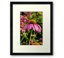 Coneflower 6 Framed Print