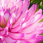 Pink and Purple Flower by Photopa