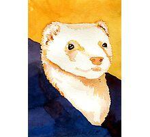 Ferret Portrait Photographic Print