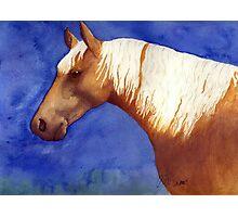 Palomino Quarter Horse Photographic Print